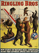 Vintage Posters Prints - Ringling Bros 1900s Bears Performing Print by The Advertising Archives
