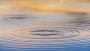 Water Drop Prints - Ripples on a Still Pond Print by Tim Gainey