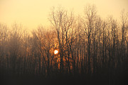 Rcnaturephotos Photos - Rise Through Fog by Rachel Cohen