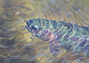 Rainbow Trout Mixed Media Prints - Rising Rainbow Print by Rob Corsetti