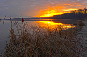 Randall Branham Prints - Rising Sunlights Up Shore Line Of Cattails Print by Randall Branham