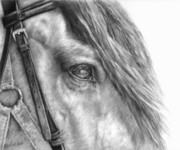 Horse Drawings Drawings - Rive Gauche by Sheona Hamilton-Grant