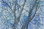MaryAnn Stafford - River Birch