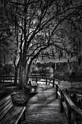 Cypress Knees Photos - River Boardwalk by Marvin Spates