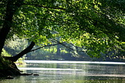 Reflections In River Prints - River Canopy  Print by Neal  Eslinger