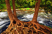 Tree Roots Metal Prints - River Metal Print by Elena Elisseeva