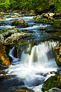 Stream Posters - River flowing through woods Poster by Elena Elisseeva