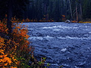 Raymond Salani Iii Posters - River in Autumn in Yellowstone Poster by Raymond Salani III
