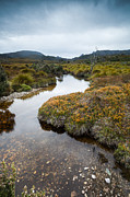 Australian Bush Prints - River in the wilderness Tasmania Australia Print by Matteo Colombo