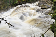 Spate Photos - River Massan In Spate by Ronnie Reffin