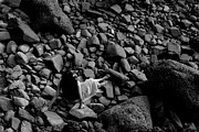 Dattaram Gawade - River of the stones