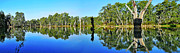 Tree Reflections In Water Posters - River Panorama and Reflections Poster by Kaye Menner