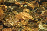 Reflections In River Prints - River Rocks Print by Thomas Rehkamp