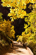 Photos Of Autumn Prints - River Walk and Fall Colors Zion National Park Utah Print by Robert Ford