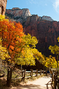 River Walk Trail Temple Of Sinavava In Fall Zion National Park Utah Print by Robert Ford