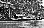 White Steamer Photos Prints - Riverboat Row Print by Paul Donohoe