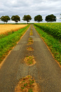 Fields Photo Posters - Road in rural France Poster by Elena Elisseeva