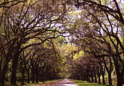 Old Home Place Framed Prints - Road of trees Framed Print by Andrea Anderegg
