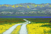 Plain Prints Framed Prints - Road Thru Carrizo Framed Print by Lynn Bauer