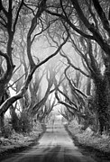 Dark Hedges Posters - Road to dream Poster by Pawel Klarecki