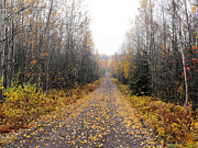 Eric Menk Metal Prints - Road to the cabin Metal Print by Eric Menk