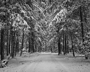Winter Landscape. Snow Prints - Road to Winter Print by Brian Young