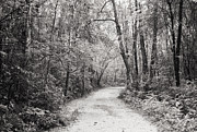 Black And White Rural Photography Prints - Road Way In The Forest Print by Setsiri Silapasuwanchai