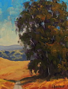 Steven Guy Bilodeau - Roadside Eucalyptus