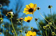 Nature Study Photo Prints - Roadside Flowers Print by Alan Roberts