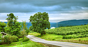 Wine Grapes Prints - Roadside Vineyard Print by Steven Ainsworth