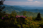 Bruce Photos Posters - Roan Mountain Summer Poster by Bruce Siulinski