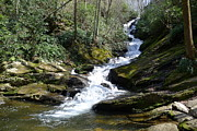 Roaring Fork Road Posters - Roaring Fork Falls - Spring 2013 Poster by Joel Deutsch