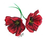 Red Poppies Drawings - Roberts Poppies by Elizabeth Guilkey