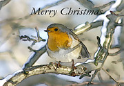 Christmas Greeting Originals - Robin Christmas Card by Mike Stephen