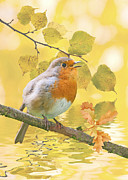 Iain S Byrne - Robin in the Fall