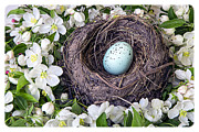 White Flower Photos - Robins Nest by Edward Fielding