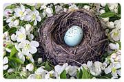 Robin's Nest Print by Edward Fielding