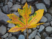 Neurotic Images Photography Prints - Rock Creek Leaf Print by Chalet Roome-Rigdon
