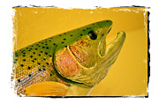 Speckled Trout Photo Posters - Rock Creek Rainbow Poster by Lauren Hunter