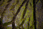 Saltspring Photo Originals - Rock Textur Green by Graham Foulkes