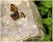 Checkerspot Prints - Rock Trio Print by Kendall Kessler