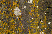 Rock Face Photo Originals - Rock with lichen by Graham Foulkes