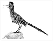Note Cards Drawings Prints - Rockin Roadrunner Print by Jack Pumphrey