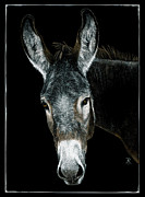 Donkey Drawings Prints - Rocky Print by Ann Ranlett