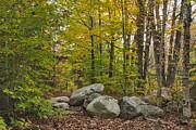 Charles Kozierok - Rocky Forest Path