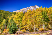 Autumn Landscape Photo Framed Prints - Rocky Mountain Autumn Bonanza Framed Print by James Bo Insogna