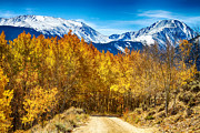 Winter Roads Photo Prints - Rocky Mountain Autumn Cruisin Print by James Bo Insogna