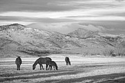 Black And White Mountain Prints Framed Prints - Rocky Mountain Colorado Country Morning BW Framed Print by James Bo Insogna