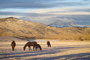 Rocky Mountain Horse Framed Prints - Rocky Mountain Colorado Country Morning Framed Print by James Bo Insogna