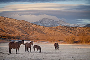 Rocky Mountain Horse Prints - Rocky Mountain Country Morning Print by James Bo Insogna